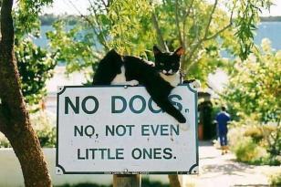 chat perché abandonné et trouvé sur la toile. si vous le reconnaissez, que vous en êtes le propriétaire, signalez vous à photojoconde@yahoo.com. envoyé par Cécile S & CO