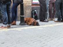 © Mel - chien en laisse Londres