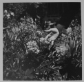 © DOISNEAU - Main et fleur, dans le jardin d'un ouvrier de la manufacture des Gobelins, 1930.