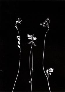 © Julien Calas - Photogramme - Le désir