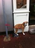 © mel - contirbution chien en laisse 14 01 03